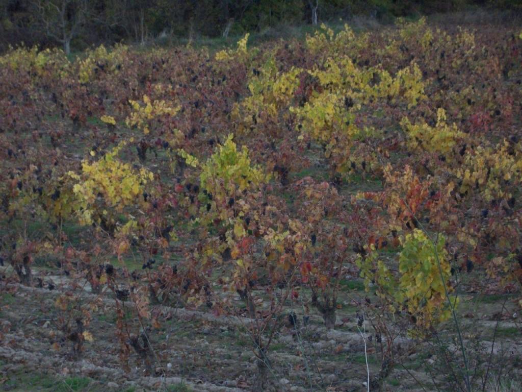 Viñedos de Rioja